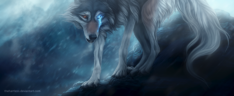 Обои Волк с разного цвета глазами, by thehartless