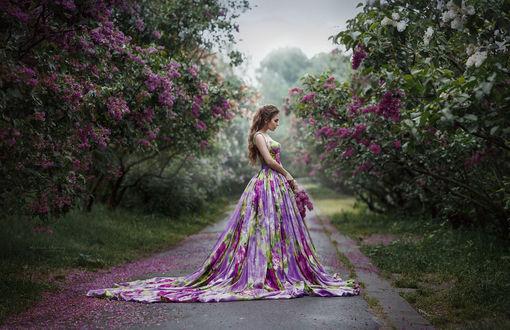 Обои Девушка в цветастом длинном платье стоит на дороге, по обе стороны которой растут кусты сирени, фотограф Ирина Джуль