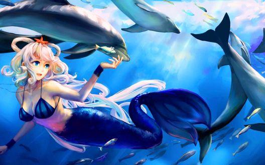 Обои Vocaloid Luo Tianyi / Вокалоид Луо Тьянуй в образе русалки плавает под водой в окружении дельфинов