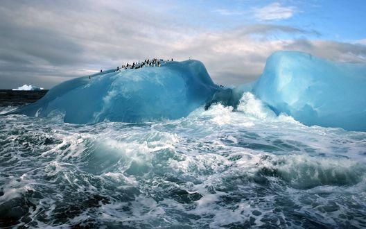Обои Колония пингвинов на айсберге, в шторм