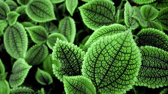 Обои Рельефные зеленые листья