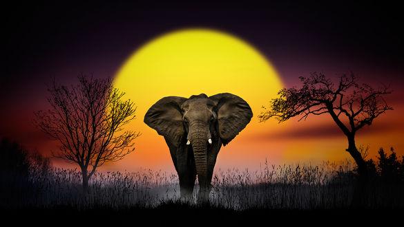 Обои Слон на фоне огромного солнца, фотограф Nasser Osman