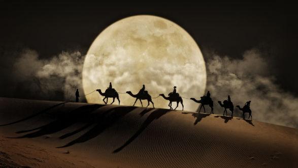 Обои Караван верблюдов идет по пустыне, фотограф Nasser Osman