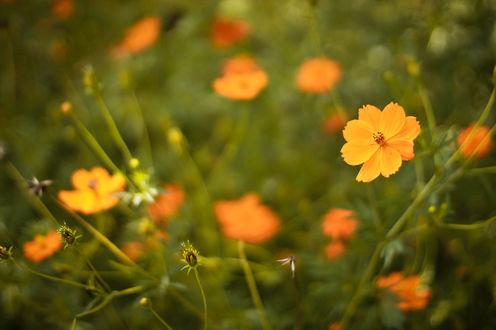 Обои Желтые цветы в траве