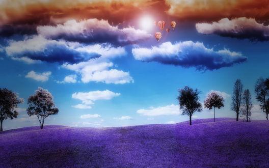 Обои Воздушные шары в облачном небе, над лавандовым полем с редкими деревьями
