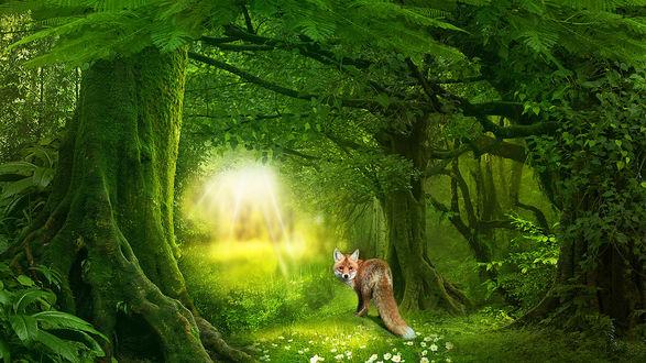 Обои Лиса стоит посреди лесной тропинки, освещенная солнцем, вокруг нее сказочный лес