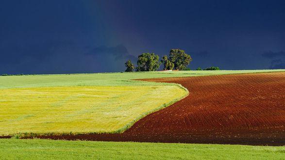 Обои Маленький пролесок среди поля на фоне темно-синего неба