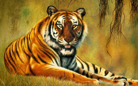 Обои Тигр с высунутым языком лежит на зеленой траве