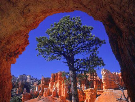 Обои Bryce Canyon, Utah / Брайс-Каньон, Юта, вид в естественной рамке