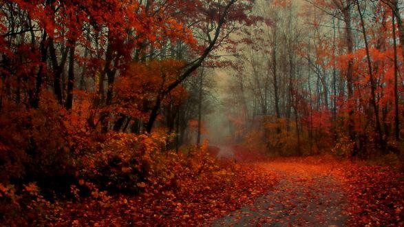 Обои Дорога усыпанная листвой в осеннем туманном лесу