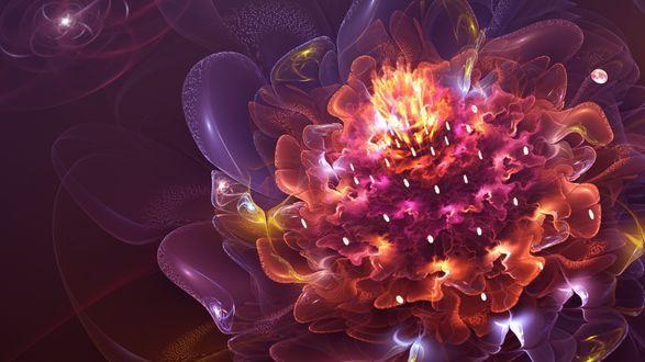 Обои Абстрактный цветок сверкает всеми красками
