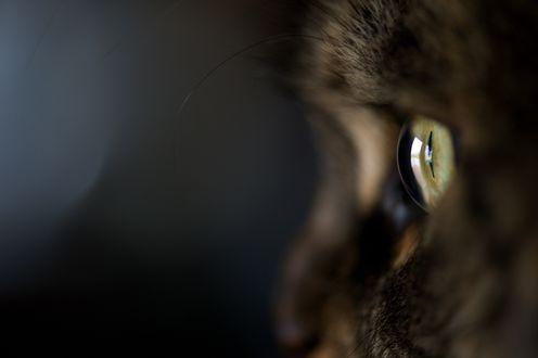Обои Зеленый глаз черной кошки