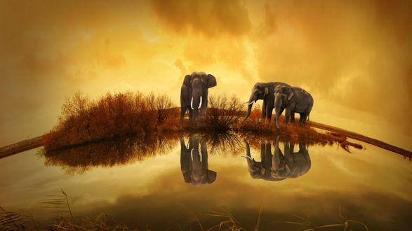 Обои Слоны стоят около озера