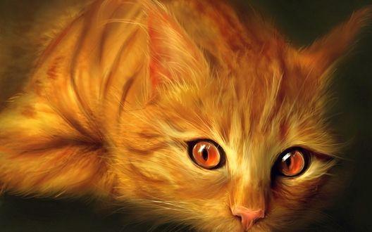Обои Пушистая рыжая кошка с янтарными глазами, крупный план