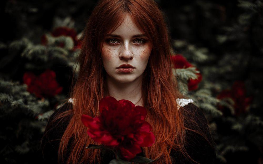 Обои для рабочего стола Красивая девушка с рыжими волосами и веснушками на лице держит красный цветок