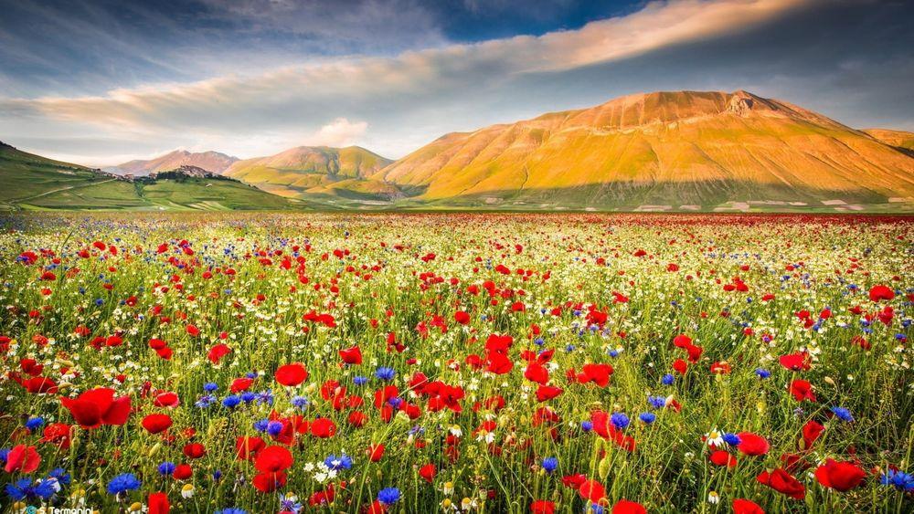Степь с цветами фото