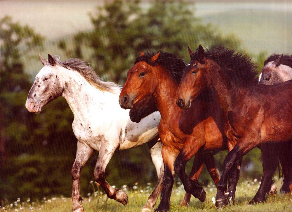 обои Мустанги Лошади, wallpaper mustangs, stallions | 728x1000