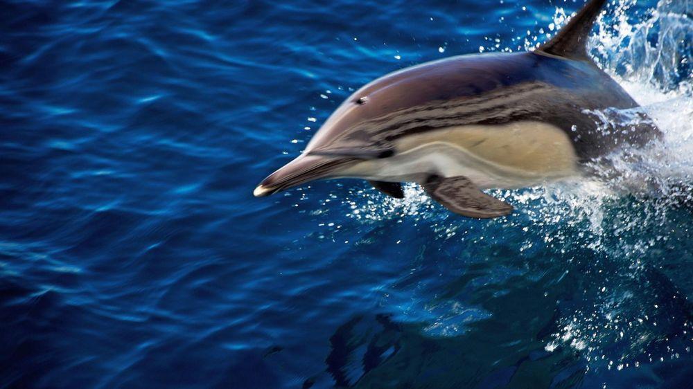 Живые обои для рабочего стола бесплатно дельфины 7