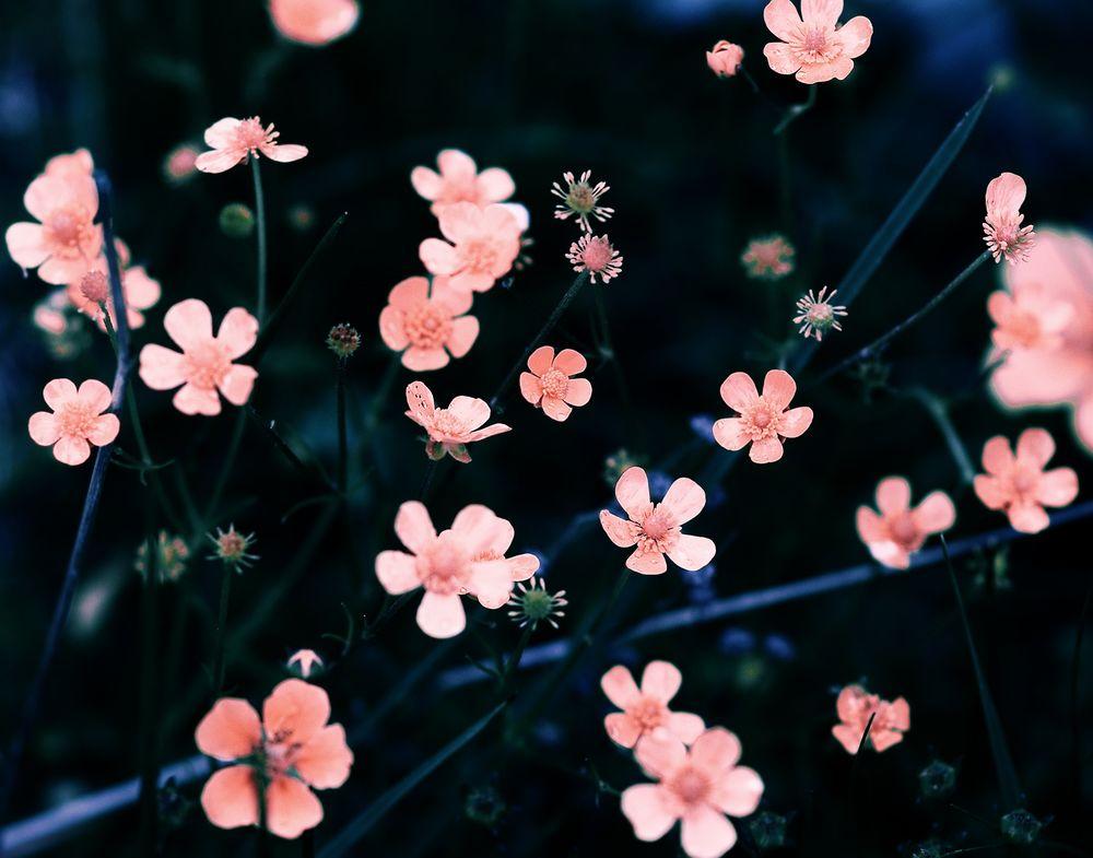 Картинки для аск цветы