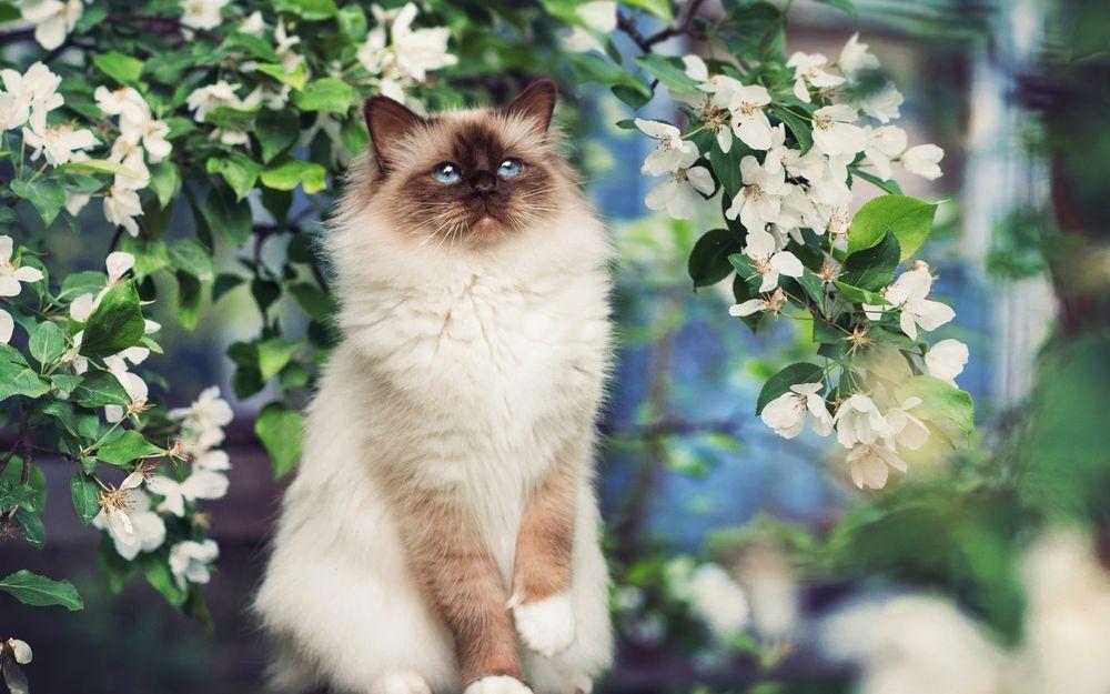 Картинки кот радуется весне