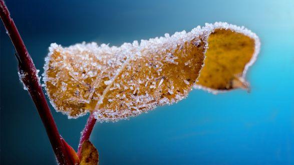 Обои На ветке ледяной листок, покрытый инеем на голубом фоне