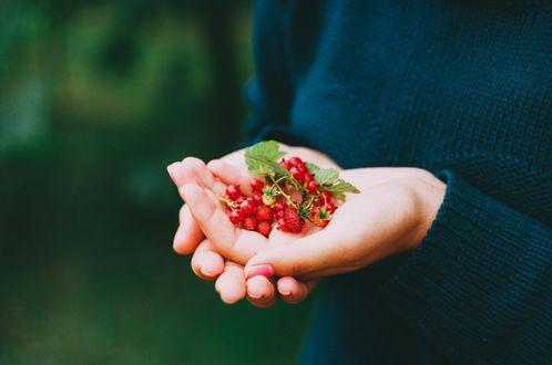 Обои Девушка держит в руках ягоды земляники и красной смородины