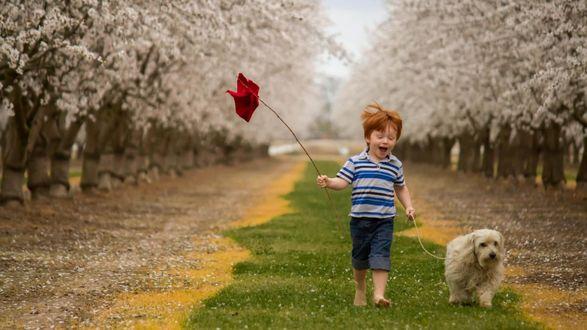 Обои Веселый мальчик гуляет с собакой весной по аллее между цветущих деревьев