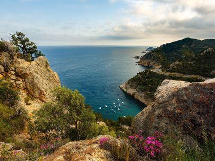 Обои Скалистый берег, деревья, цветы, внизу море с кажущимися крохотными с высоты белыми яхтами, пасмурное небо