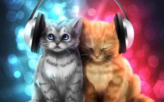 Обои Два котенка в наушниках сидят, на многоцветном фоне