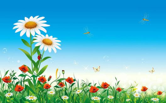 Обои Зеленый луг с ромашками и маками, над которыми летают стрекозы и порхают бабочки, на фоне синего летнего неба, векторная графика
