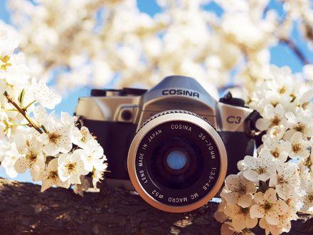 Обои Фотоаппарат Cosina лежит на ветке цветущей вишни (Lens Made in Japan, 35-70mm, 1:3. 5-4. 8, MC Macro 52)