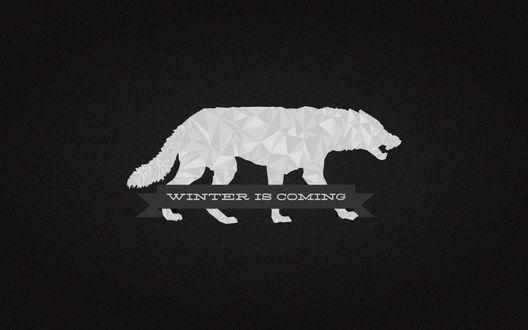 Обои Белый волк и фраза Winter is Coming / Зима близко, сериал Game of Thrones / Игра престолов