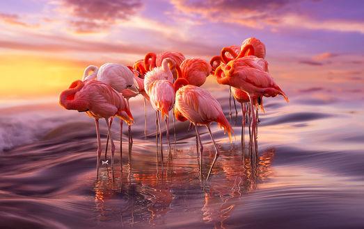 Обои для рабочего стола Розовые фламинго стоят в воде на закате (© dixinox),Добавлено: 13.07.2016 00:01:31