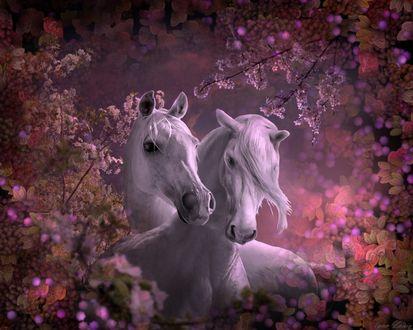 Обои Две белые лошади в цветочном саду