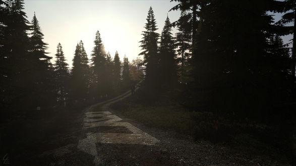 Обои Дорога сквозь темный лес, по которой идет одинокий путник