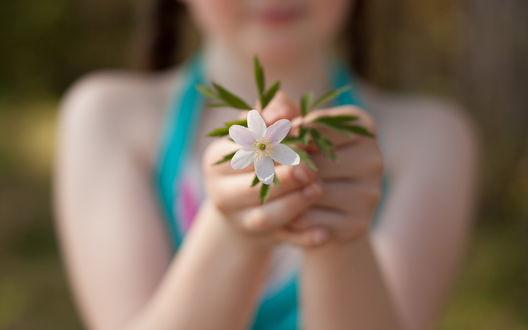 Обои Девочка протягивает в камеру белый цветок