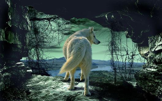Обои Работа Легенда о белом волке, фотограф Серега Сергеев