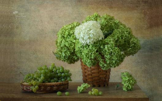 Обои Букет зеленой и белой гортензии, и зеленый виноград в плетеных корзинках на деревянном столе, фотограф Инна Сухова