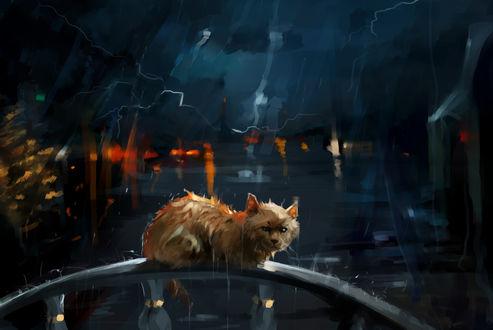 Обои Брошеный кот под дождем, by SalamanDra-S