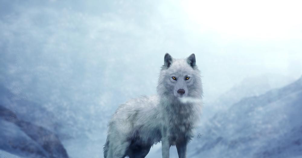 Фотография волк