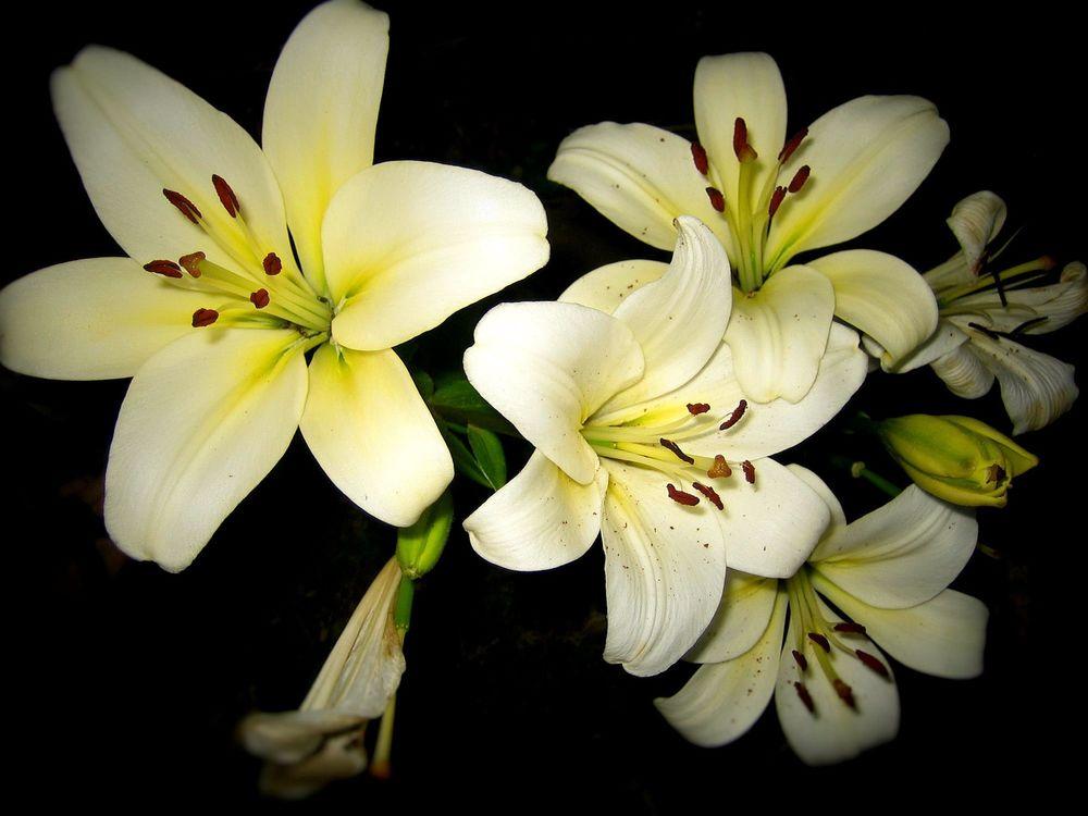 тело ольги фото цветов лилия значение девочки настолько