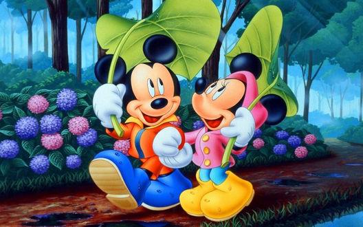 Обои Микки - Маус идет с подругой под руку по лесной тропе, укрывшись от дождя большими листьями
