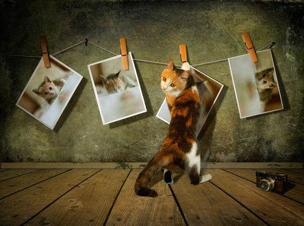 Обои Рыжий кот развешивает свои фотографии на веревке, фотограф Svetlana Melik-Nubarova
