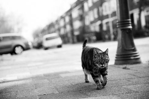Обои Серьезный полосатый кот на улице города