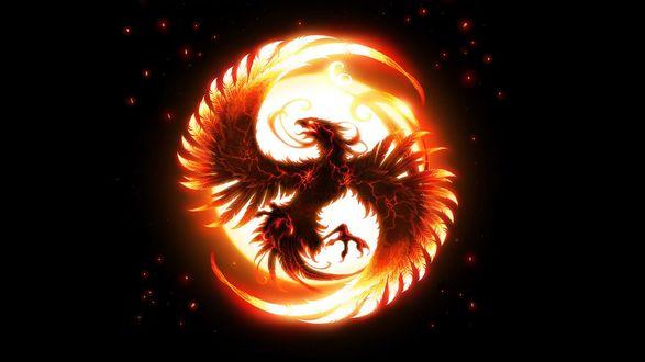 Обои Птица Феникс в пылающем круге, на черном фоне