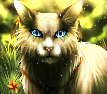 Обои Кошка с голубыми глазами, by eliza1star