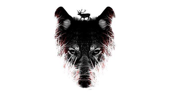 Обои В лице волка отражается олень идущий по траве в ночи