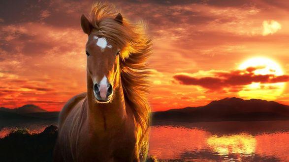 Обои Конь на фоне красивого заката