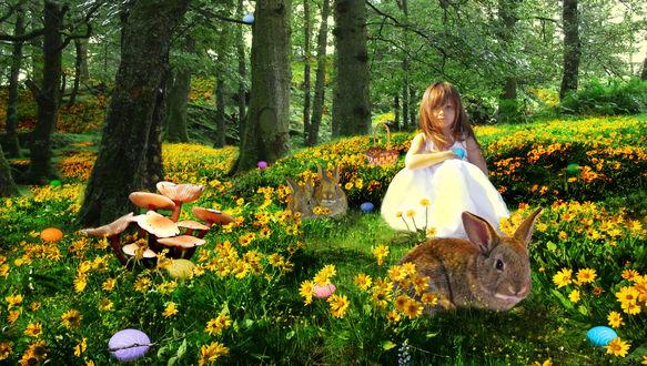 Обои Маленькая девочка в белом платье сидит на поляне с желтыми цветами, в лесу с кроликами