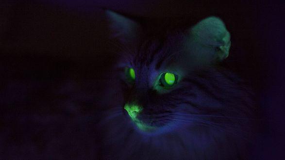 Обои Кот в темноте с зеленными светящимся глазами, смотрит пристальным взглядом